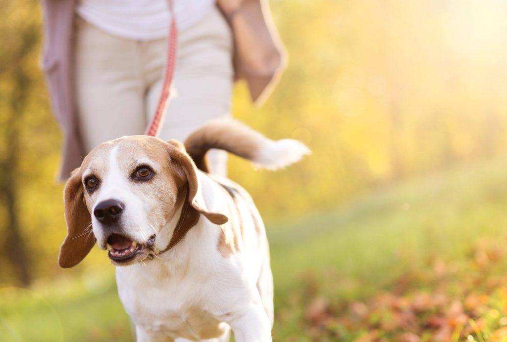 Visit The Dog Shelter